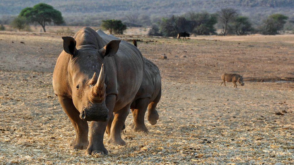 Nashorn - Big Five auf fincanordica.de
