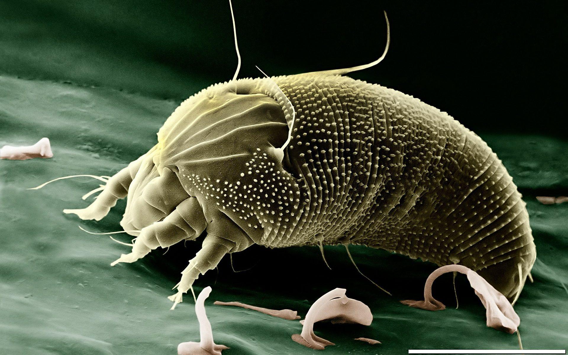 Parasitenalarm - Milben am Hund auf fincanordica.de